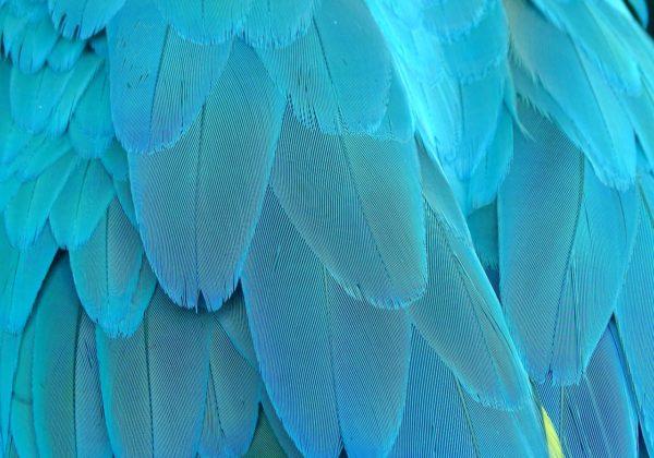 Creature fantastiche e dove trovarle: la lingua poliedrica di Luigi Meneghello